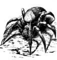 Bestiary spear spider.png