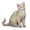 Poe2 pet backer cat Noah icon.png