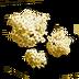 Pilgrims crown icon.png