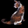 Poe2 pet backer cat Gosha icon.png