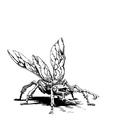 Bestiary scarabBeetle.png