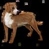 Poe2 pet backer dog Pancake icon.png