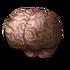 Vithrack Brain