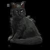 Poe2 pet backer cat Corlagon icon.png