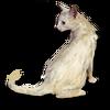 Poe2 pet backer cat Cajux icon.png