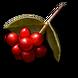 Ryngr berries icon.png