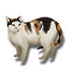 Pet calico cat icon.png