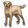 Pet yellow lab icon.png