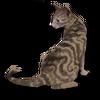 Poe2 pet backer cat Chloe icon.png