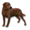 Poe2 pet backer dog Roxy icon.png