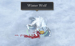 The hunters favor injured wolf.jpg