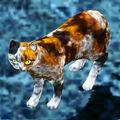 Calico Cat.jpg