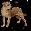 Poe2 pet backer dog Chili icon.png