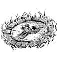 00 SII skean shrine skull key.png