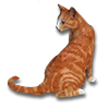 Poe2 pet backer cat Ickis icon.png