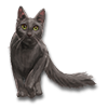 Poe2 pet backer cat Misty icon.png