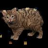 Poe2 pet backer cat Mirri icon.png