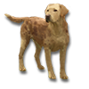 Poe2 pet backer dog Abraham icon.png