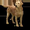 Poe2 pet backer dog Abraham icon.png