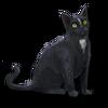Poe2 pet backer cat Loki icon.png