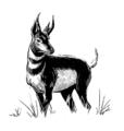 Bestiary antelope.png
