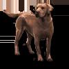 Poe2 pet backer dog Rex icon.png