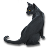 Poe2 pet backer cat Peter icon.png