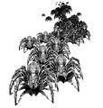 Bestiary spiderling swarm.png