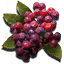 Springberries icon.png