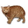 Poe2 pet backer cat Otto Starcat icon.png