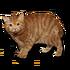 Otto Starcat