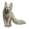 Poe2 pet backer cat Dude 6 Toes icon.png