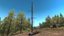 Arrow Tree.png