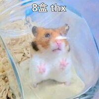 2盒 thx(倉鼠8)