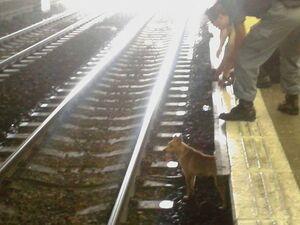 MTR dog incident 1