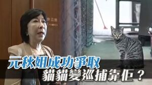 元秋姐成功爭取 屋苑養貓捉老鼠!