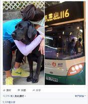 Blindguilddogcantgetsunbus3