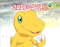 Seed dm