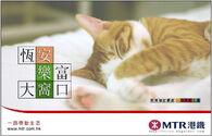 MTR cat hkgolden
