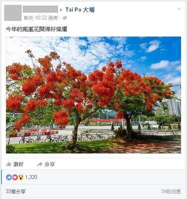 Taipoheroflower2016