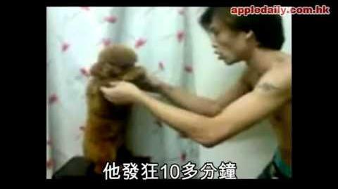 馬來西亞facebook虐狗短片事件