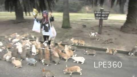 港女日本兔島被圍短片