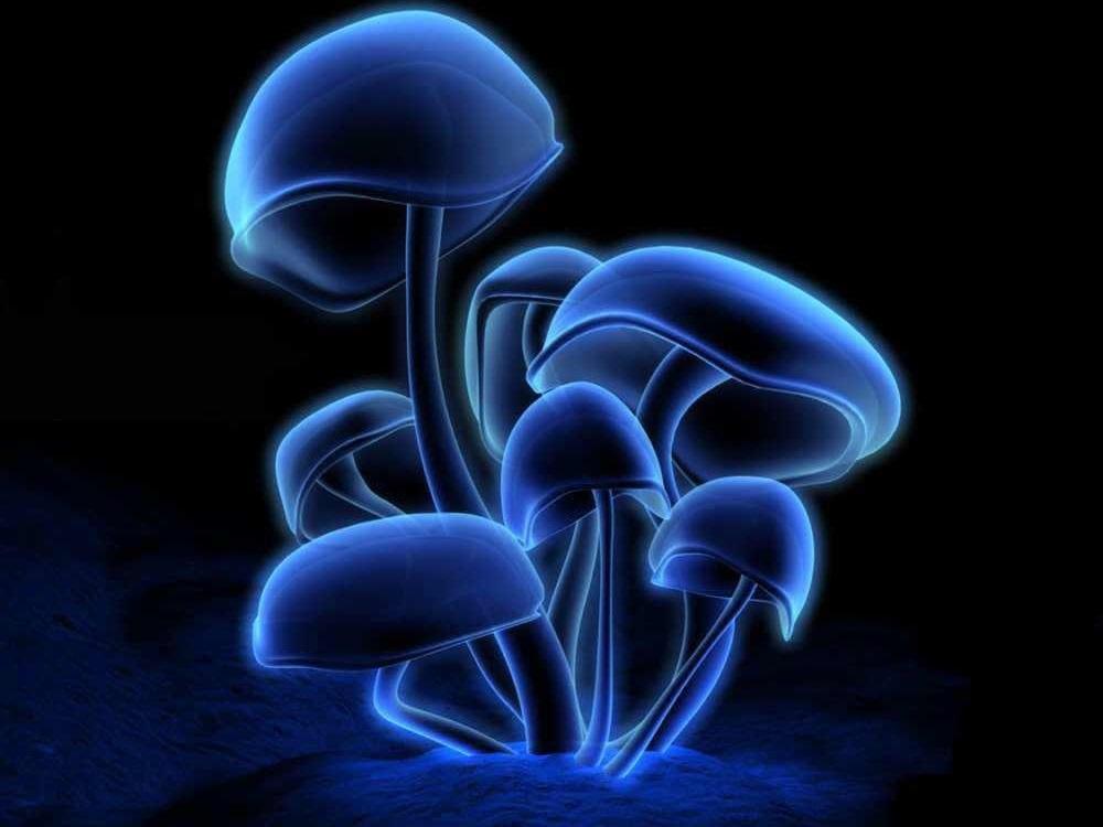 Medusoid Mycelium