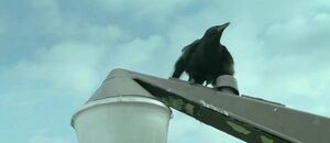 The Foulmouthed Crow