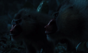 Monkey mutts