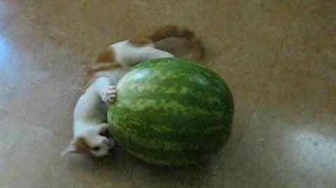 Kitten vs. Watermelon