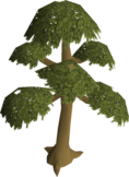 Yew tree (1).png