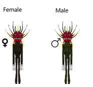 Desert Gordred genders