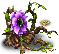 Antenolla C (Root)