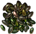 Icon-Decayed Seeds.png